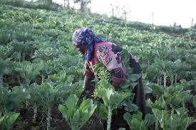 agriculture development in africa